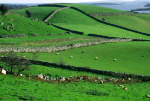 Walls of Ireland, a photograph by Solomon Levy