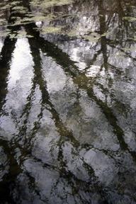 Reflections_NToizerWEB